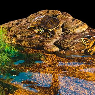 Obrázek pro kategorii Hagen plovoucí ostrovy