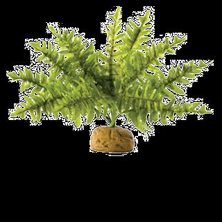 Obrázek pro kategorii rostliny plastové