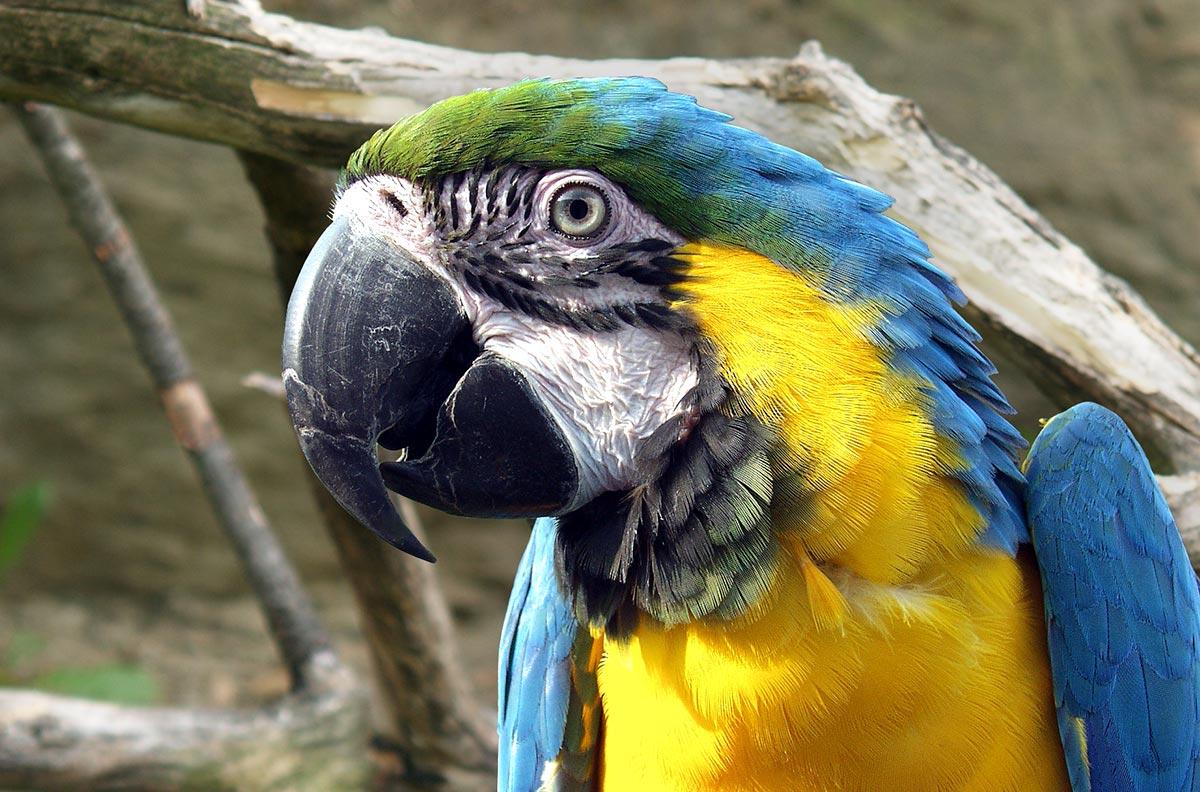 Obrázek pro kategorii Ptáci