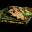 Picture of Dekorace EXO TERRA krokodýlí lebka